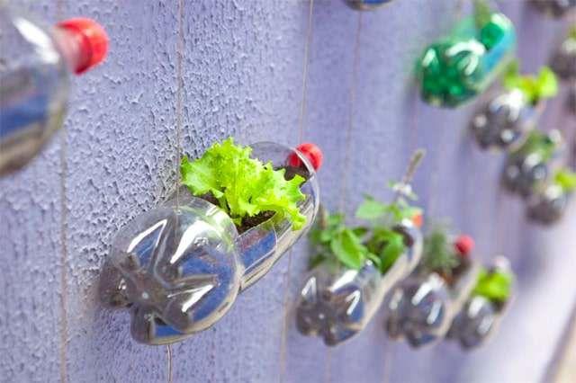 Tái chế chai nhựa để trông rau - Công ty Phế liệu Quang Đạt