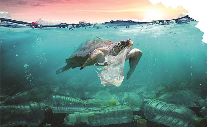 Ảnh hưởng cảu rác thải nhựa đến sinh vật